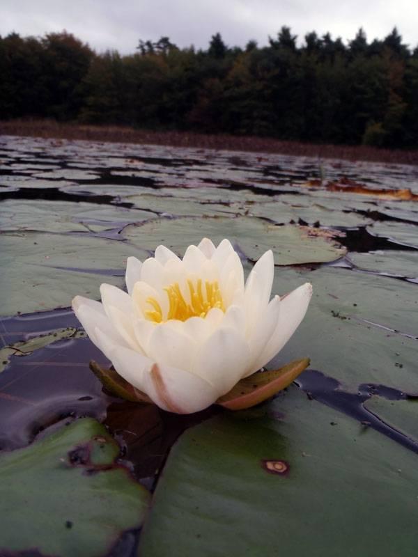 Pemaquid Lake Kayaking